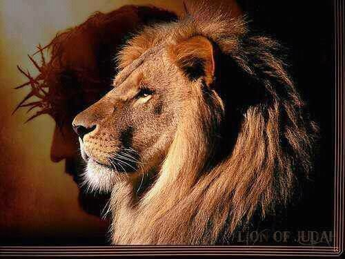 lion of juda